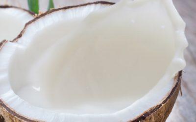 Bulk Coconut Milk and Cream – Exotic and versatile
